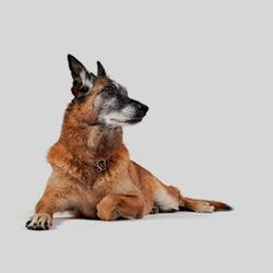 geriatrico_perro