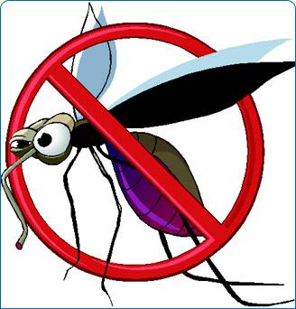 mosquito leishmania