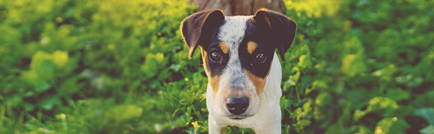 esterilizacion-perros
