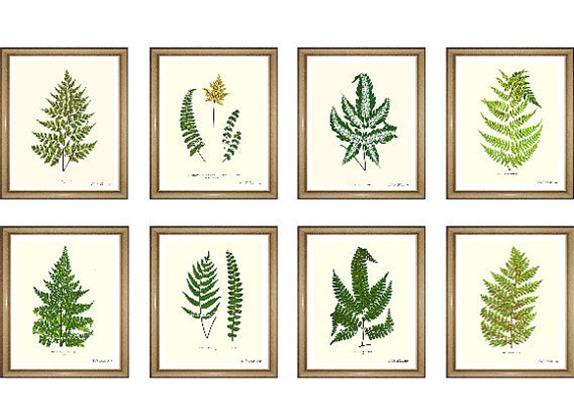 fern prints botanical prints shop