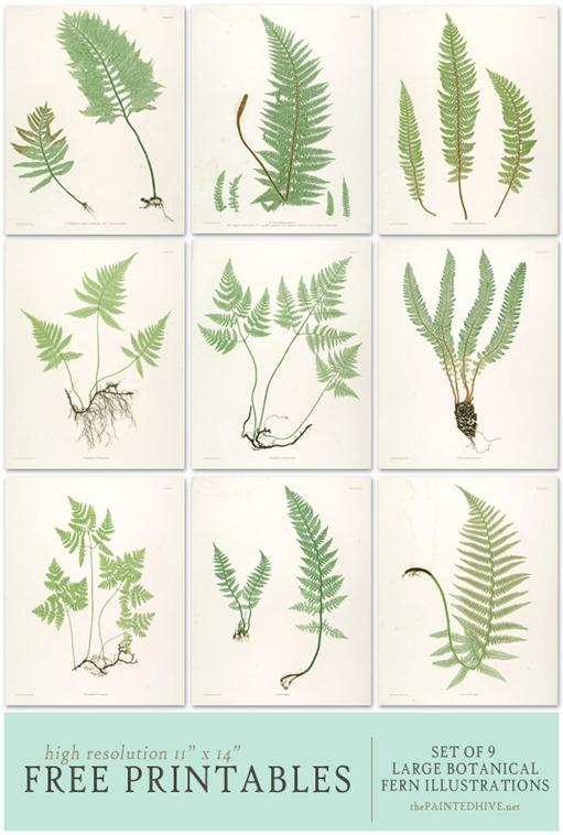free download fern prints