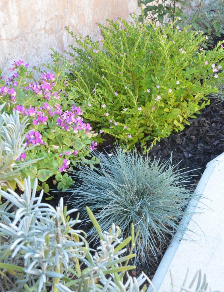 sage and purple plants