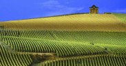 france-panoramic-view-of-vineyards-champagne