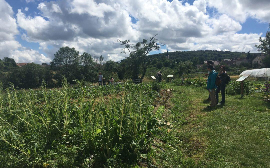 Cueillette de légumes – samedi 25 septembre de 9h à 12h