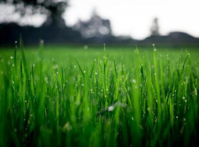 Irrigatori da giardino: quale scegliere? Ecco tutto ciò che c'è da sapere