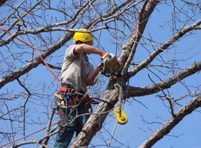 Potatura degli alberi: come e quando si fa. Tra salute e sicurezza della pianta