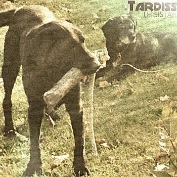 Tardiss: Thisistar