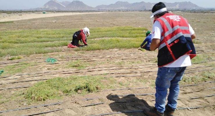 Sunafil inspecciona 47 empresas agroindustriales en La Libertad