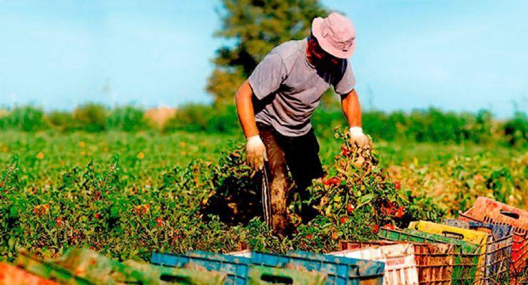 Desafíos para la seguridad y salud en la agricultura