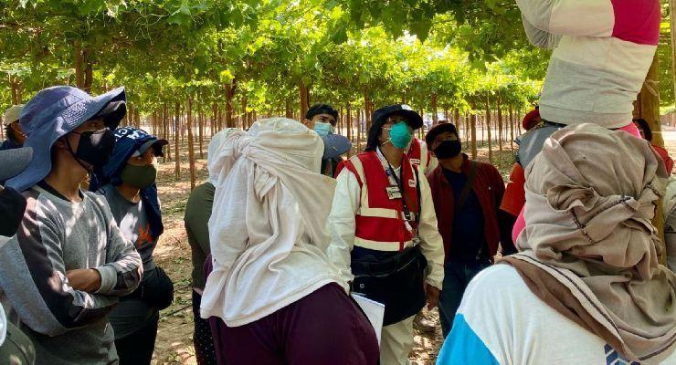Inspección de SUNAFIL beneficia a más de 180 mil trabajadores en Ica