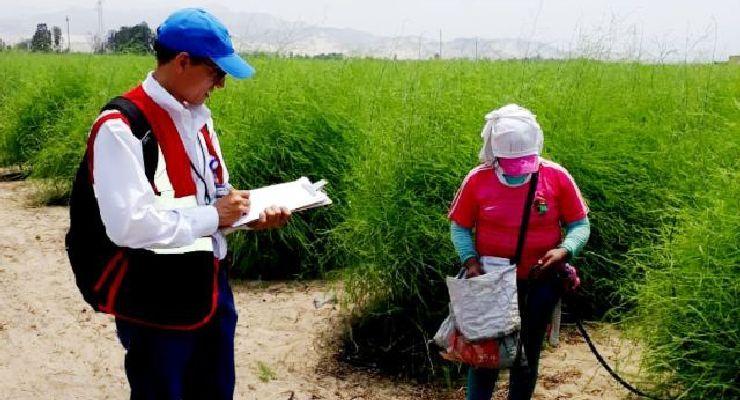 SUNAFIL aprueba Versión 2 del Protocolo para la Fiscalización en Materia de Seguridad y Salud en el Trabajo en el Sector Agrario
