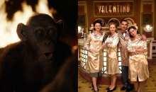 Filmové události #28/17: Svět podle Daliborka rozděluje veřejnost, nové projekty chystají Coenové i Tarantino