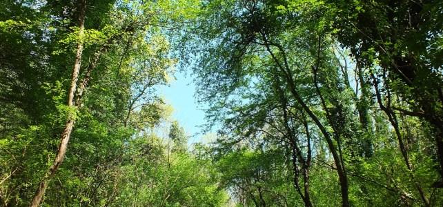 Parco Urbano in pineta: il parere dell'esperto