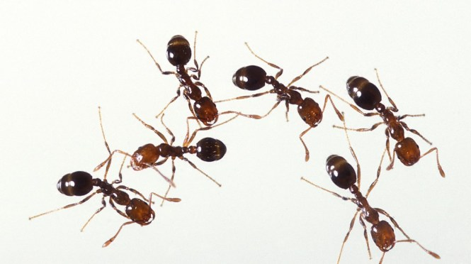 Find Out How To Get Rid Of Ants