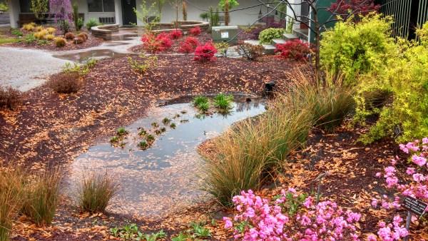 rain garden plants south carolina The Low Impact Homeowner | North Carolina Cooperative