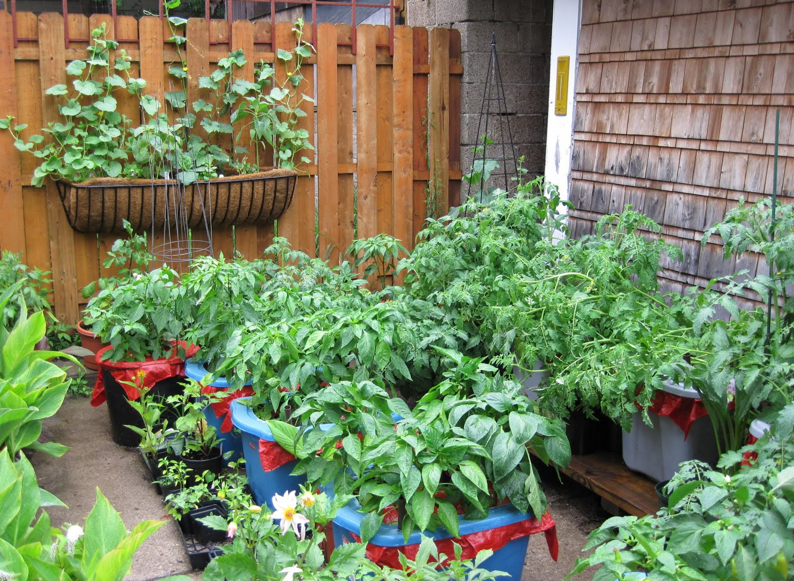 growing veggies in containers can be fun and rewarding