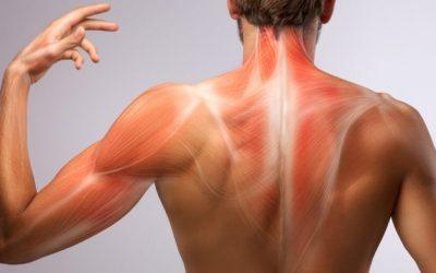 Estrés crónico y sus consecuencias a nivel corporal