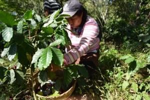 CESPPO Comercio Justo El Salvador (47)