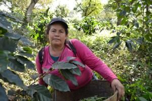 Coop. EL Jabali Comercio Justo El Salvador (151)