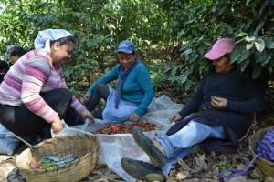 Coop. EL Jabali Comercio Justo El Salvador (179)