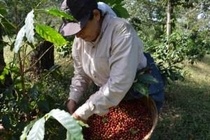 Coop. EL Jabali Comercio Justo El Salvador (35)