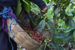 Coop. EL Jabali Comercio Justo El Salvador (59)