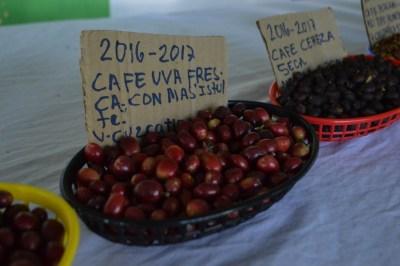 Coop. EL Jabali Comercio Justo El Salvador (231)