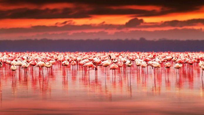 Lake Nakuru, Kenya  Dünyanın En Renkli 10 Yeri Lake Nakuru Kenya