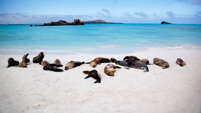 Denizi ve Doğayı Severler İçin Galapagos Adaları