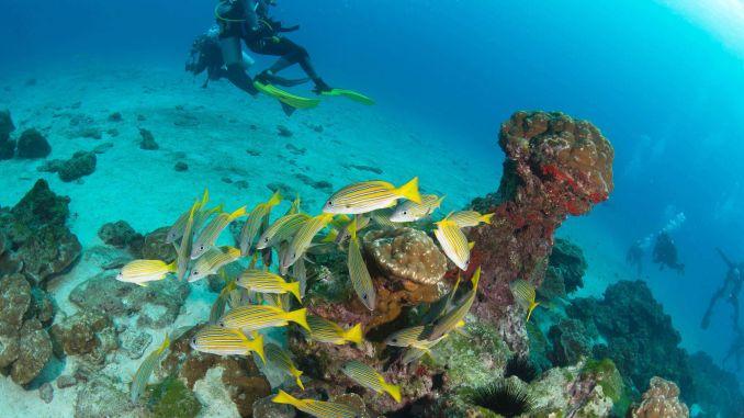Okyanus Severler İçin Cocos Adası, Kosta Rika