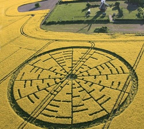 """Teorema matemático em plantação? Circlemakers dizem """"Olá"""""""