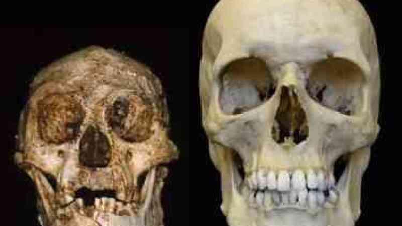 Minúsculo hominídeo é a grande descoberta recente na história da evolução