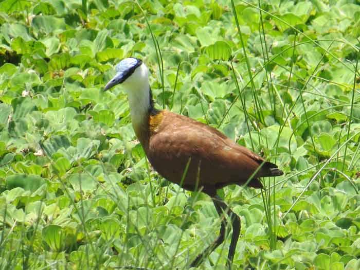 Parque Nacional Orango (2)