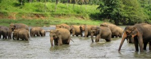 Why Sri Lanka