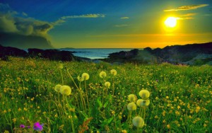 Spring-Nature-Sunset1-1024x640
