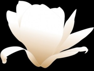 magnolia-clip-art