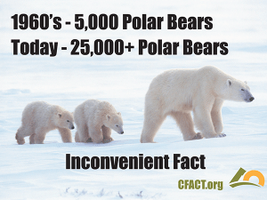 COP 21 slides polar bears