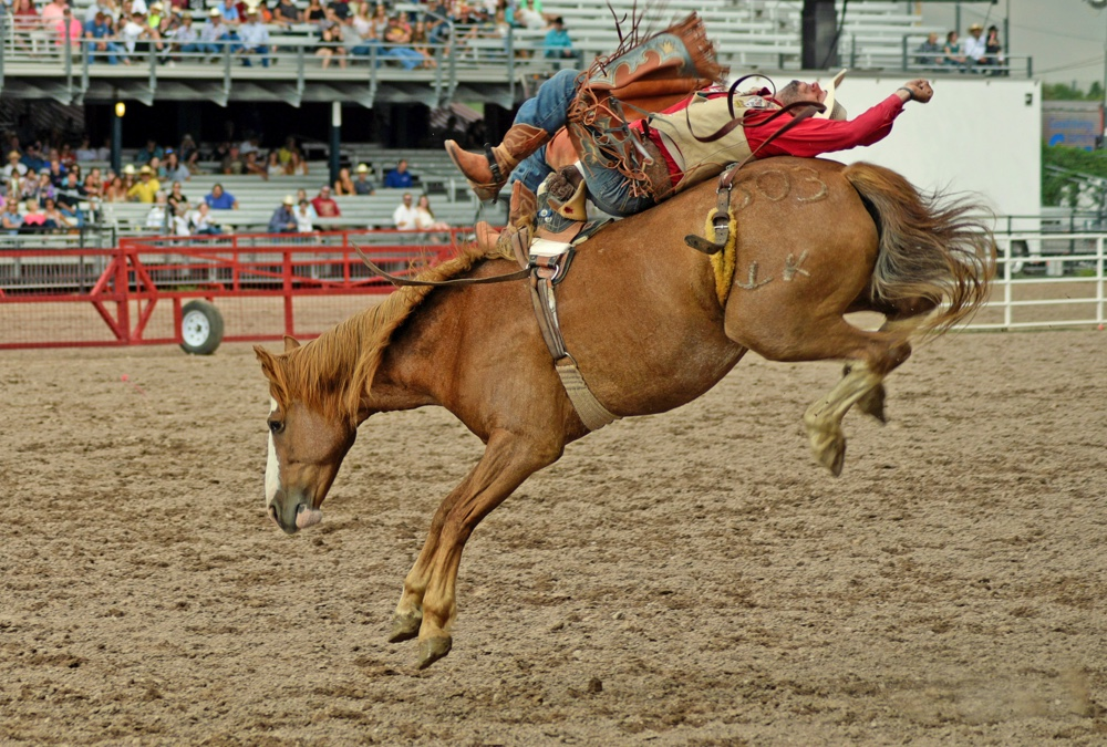 The Rodeo Bareback Riding Cheyenne Frontier Days