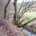 image grenzau-17-spaziergang-wald-02-jpg