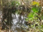 Hardee County - Paynes Creek