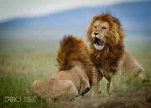La mia Wildlife, Marco Urso - 01