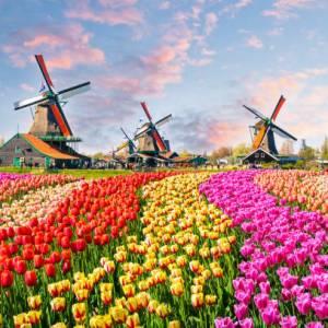 离开荷兰后才发现:鬼地方,我是那么的想念你 Netherlands flowers  新闻 Netherlands flowers