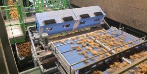 掌握荷兰产业情况,只需看完这四条 aardappelen 300x152