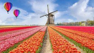 掌握荷兰产业情况,只需看完这四条 tulpen en molen 300x170