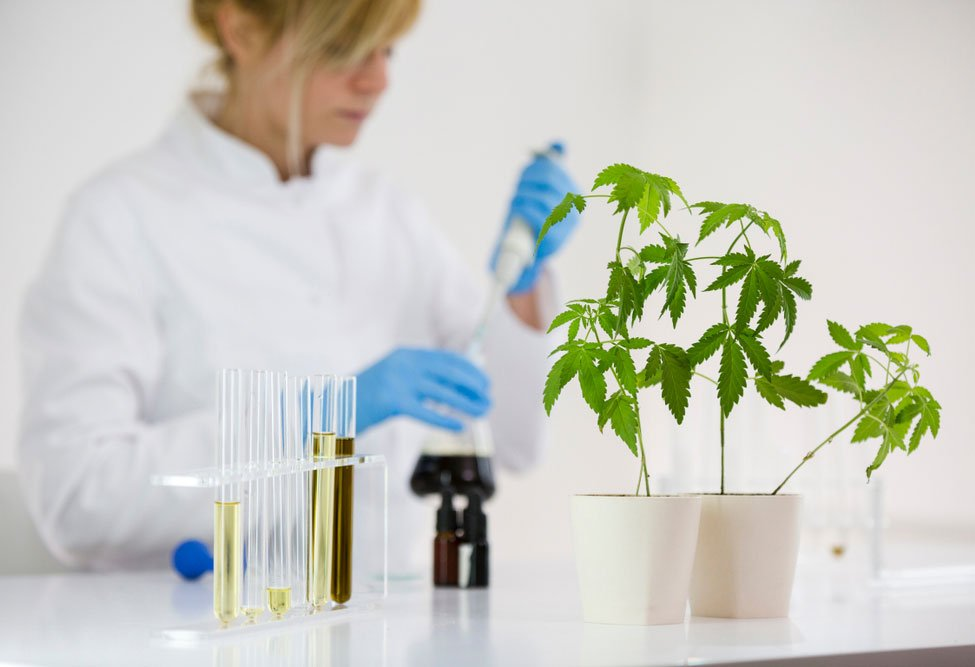 What are the Main CBD Extraction Processes?