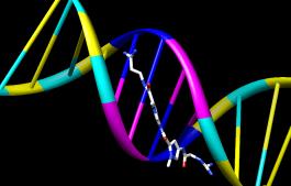 tangga nukleotida
