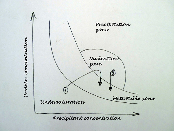 Crystallization phase diagram