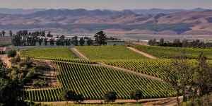 Le vignoble Californien