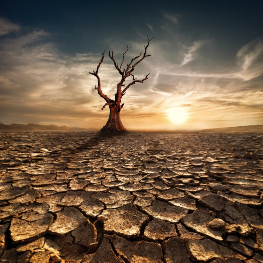 Global Warming Concept. Lonely Dead Tree Under Dramatic Evening