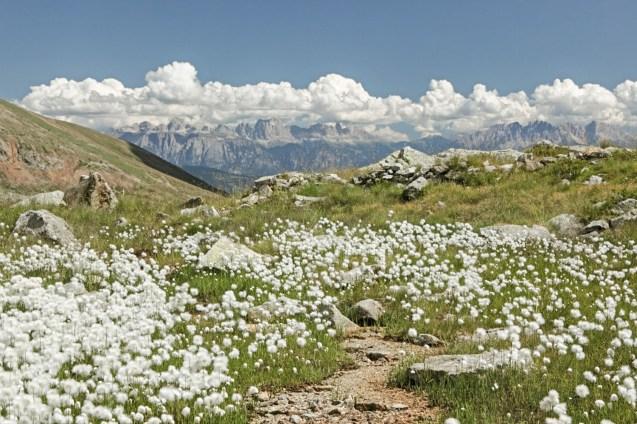 Berge Frühling